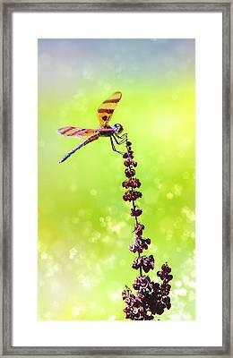Dragonfly Sparkles Framed Print by Bill Tiepelman