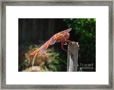 Dragonfly Stretching Framed Print by Susan Wiedmann