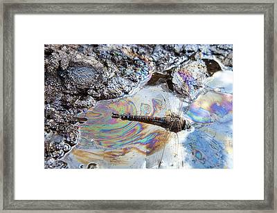 Dragonfly Stuck In Tar Sand Framed Print