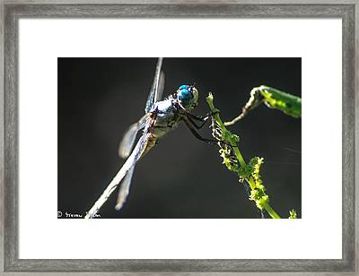 Dragonfly Taking A Rest  Framed Print by Steven  Taylor