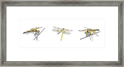 Dragonfly Trilogy Framed Print