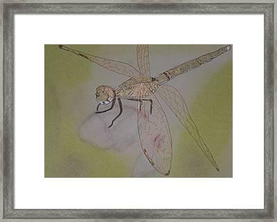 Dragonfly Visitor Framed Print by Marcia Weller-Wenbert