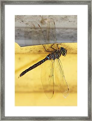 Framed Print featuring the photograph Dragonfly Web by Melanie Lankford Photography