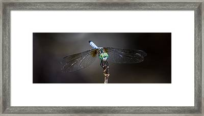 Dragonfly Wings Framed Print by Paula Porterfield-Izzo