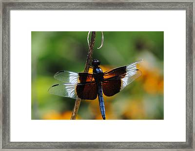 Framed Print featuring the photograph Dragonfly Zoom by Robert  Moss
