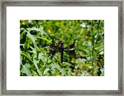 Framed Print featuring the photograph Dragonflyongreenery by Robert  Moss