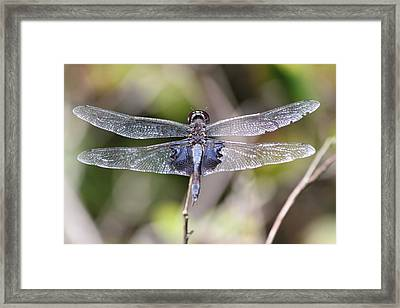 Dragons Wings Framed Print