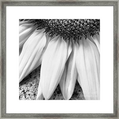 Drained And Still Beautiful Framed Print