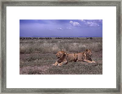 Framed Print featuring the photograph Drama On The Serengeti by Gary Hall
