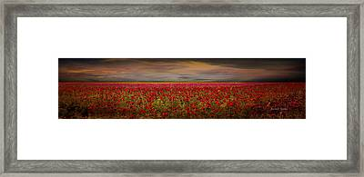 Drama Over The Flower Fields Framed Print by Angela A Stanton