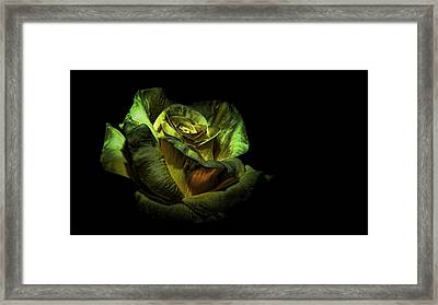 Dramatic Beauty Framed Print by Cecil Fuselier