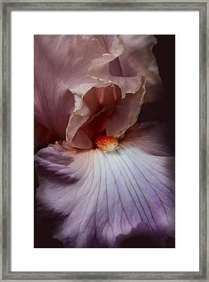 Dramatic Iris Flower Portrait Framed Print by Jennie Marie Schell