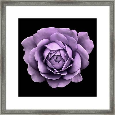 Dramatic Lavender Rose Portrait Framed Print by Jennie Marie Schell