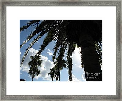 Framed Print featuring the photograph Dramatic Palm by Jeanne Forsythe