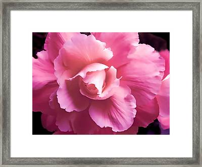 Dramatic Pink Begonia Floral Framed Print by Jennie Marie Schell