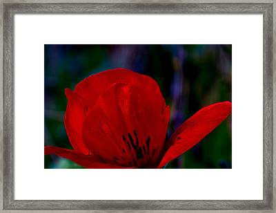 Dramatic Poppie Framed Print