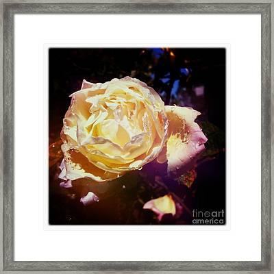 Dramatic Rose Framed Print