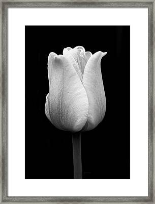 Dramatic Tulip Flower Black And White Framed Print by Jennie Marie Schell