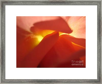 Glowing Orange Rose 2 Framed Print by Tara  Shalton