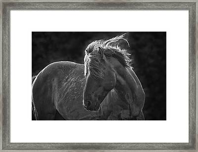 Dramatic Wild Mustang Framed Print by Bob Decker