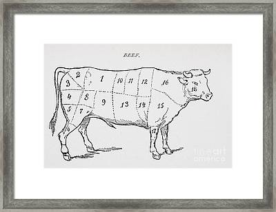 Drawing Of A Bullock Marked To Show Eighteen Different Cuts Of Meat Framed Print