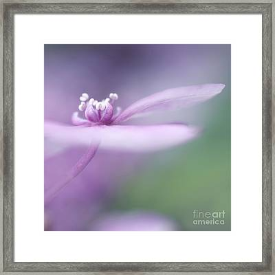 Dream A Little Dream Framed Print by Priska Wettstein