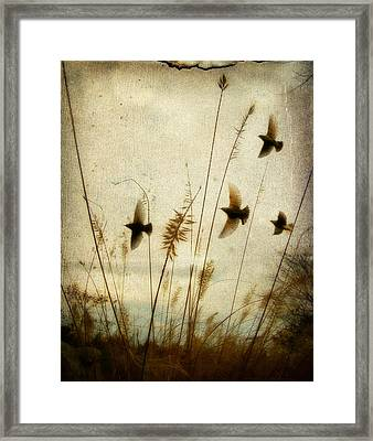 Dream Field Framed Print by Gothicrow Images