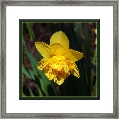 Dream Flower Framed Print by Teresa Schomig