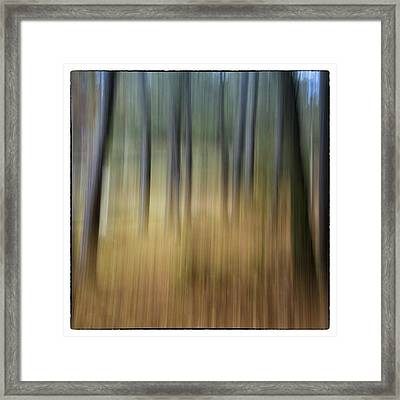 Dream Forest Framed Print