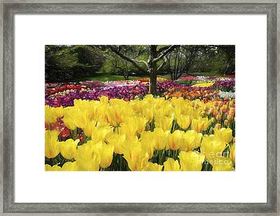 Dream Garden Framed Print by Paul W Faust -  Impressions of Light