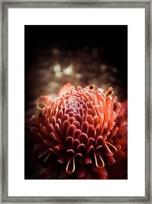 Dream In Bloom - Orange  Framed Print