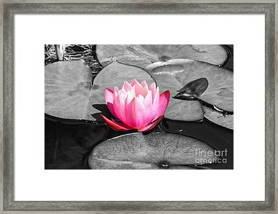 Dream Lily Framed Print by Mariola Bitner
