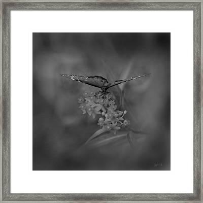 Dream Maker Framed Print by Joseph G Holland