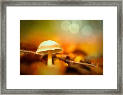 Dream Mushroom Framed Print by Dirk Ercken