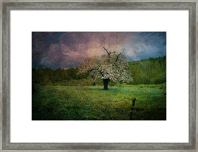 Dream Of Spring Framed Print