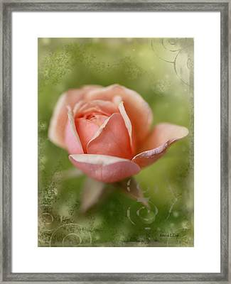 Dream Rose Framed Print by Bellesouth Studio
