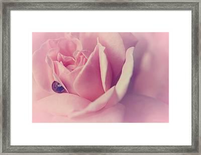 Dream Rose Framed Print by The Art Of Marilyn Ridoutt-Greene