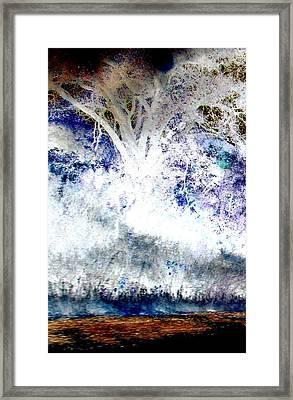 Dream Tree  Framed Print