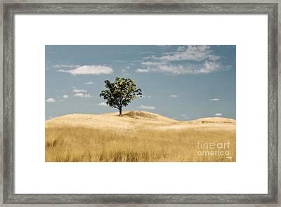 Dream Tree Framed Print by Scott Pellegrin