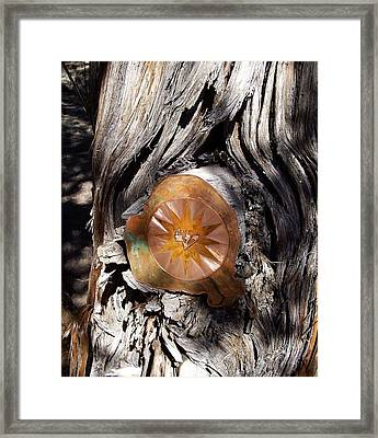 Dream Tree Shin Framed Print
