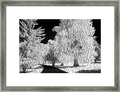 Dream Trees Framed Print