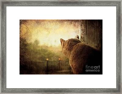 Dreamer Framed Print by Ellen Cotton