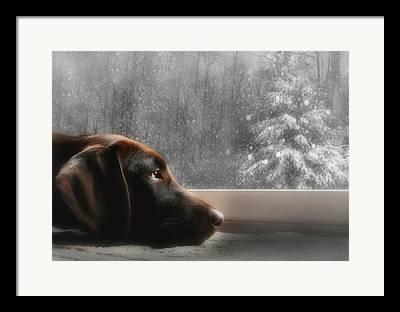 Christmas Dogs Framed Prints