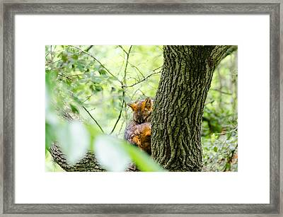 Framed Print featuring the photograph Dreaming Above All by Steven Santamour