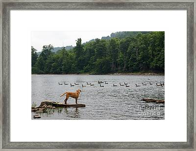 Dreaming Big Framed Print