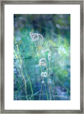 Dreaming In Blue Framed Print by Carol Groenen