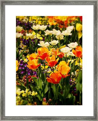 Dreaming In Color Framed Print by Rodney Lee Williams