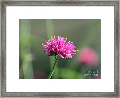 Dreaming In Fuschia II Framed Print by Suzanne Gaff