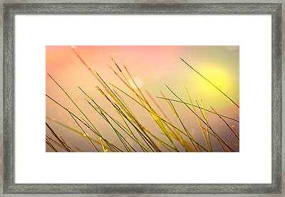 Dreaming In The Grass Framed Print by Bob Orsillo