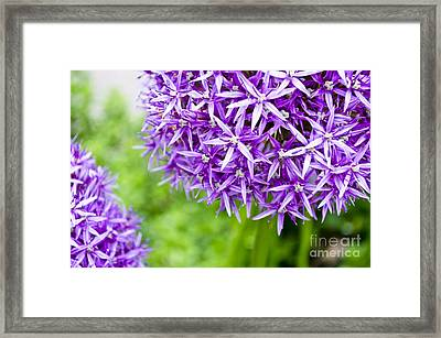 Dreaming Framed Print by Maria Janicki